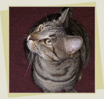 Sweetie the cat from The Nose Knows by Holly Lewitas